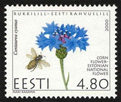 Esmonia Lopperio Flower nature flona sts cornflower the estonian national flower