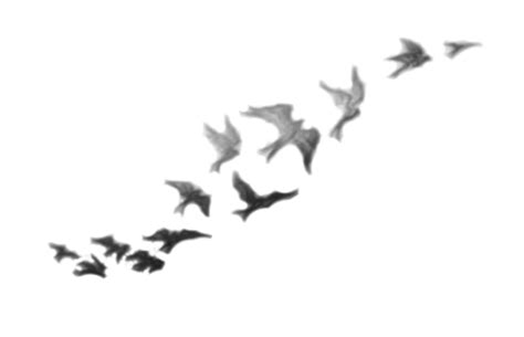demi lovato birds tattoo png by rainofsparks on deviantart