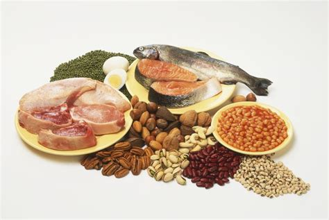 7 protein foods low carb and other proteins to eat