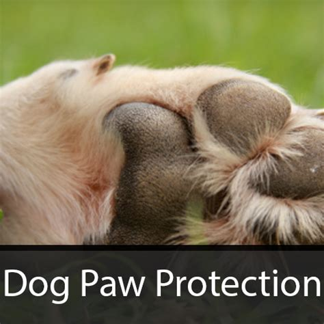 paw protection paw protection dogpawprotect