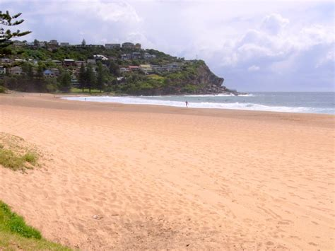 sand beaches file whale beach sand jpg wikipedia