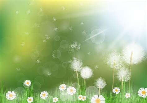 dandelion background beautiful dandelion background free vector