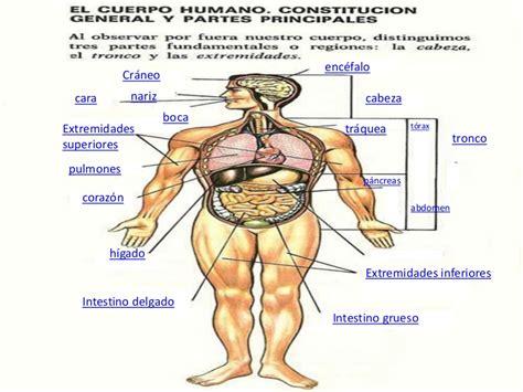 sin cadenas en ingles presentacion cuerpo humano