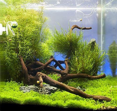 Aquascaping Shop by 220 Ber 1 000 Ideen Zu Kleines Aquarium Auf