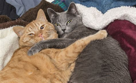Snuggle On The by Do Your Cats Demand Snuggle Time Like Mine Catster