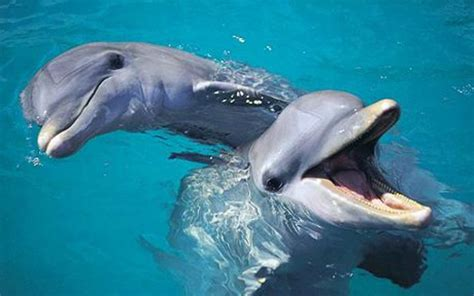 Crystal Joy: Two Bottlenose Dolphins