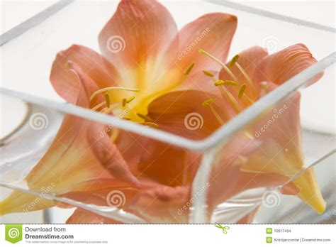 Flowers Inside Glass Vase by Beautiful Flowers Inside A Glass Vase Stock Images Image