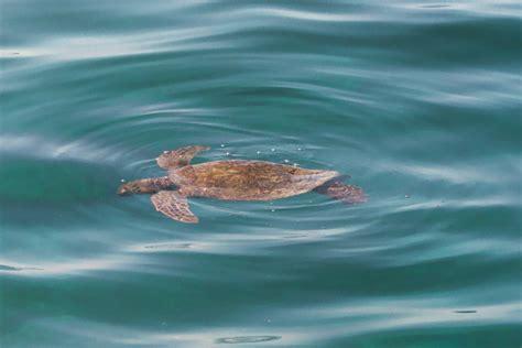 glass bottom boat kauai hawaiian images