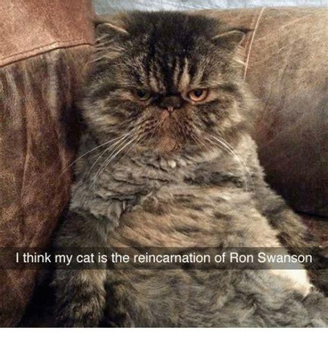 Chris Farley Reincarnation Meme - 25 best memes about chris farley reincarnation chris