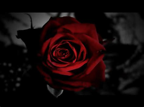 imagenes rosas dark the rose that was once me invisiblexxx