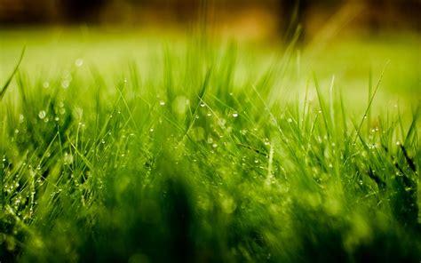 wallpaper 4k romance grass dew drops cute romantic hd desktop wallpapers 4k hd