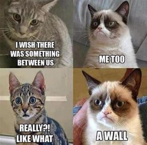 Mean Cat Memes - grumpy cat is so mean cat memes pinterest