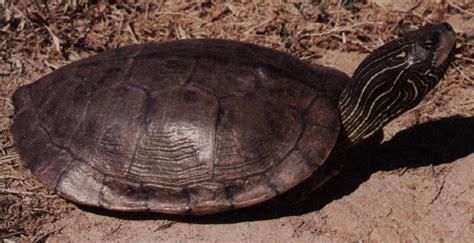 missouri map turtle map turtle