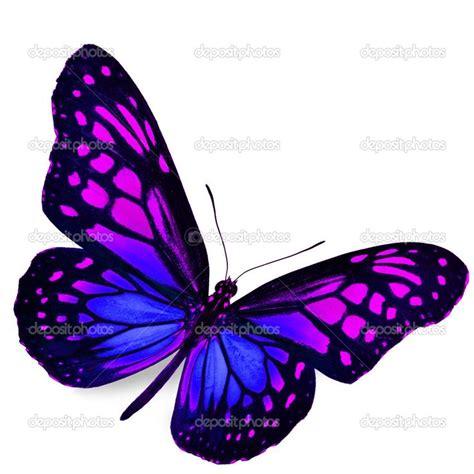 imagenes de mariposas moradas y azules 17 beste idee 235 n over mariposas reales op pinterest