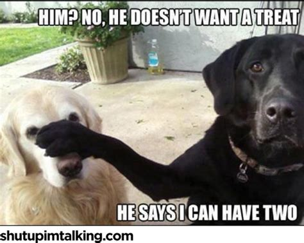 dogs shut  im talking