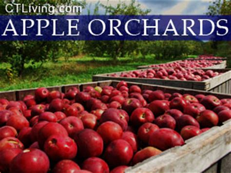 Guilford County Sweepstakes - new haven county connecticut apple orchards new haven county ct pyo apples ct pick