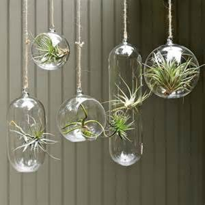 How To Hang Plants From Ceiling by 10 Unconventional Ways To Display Plants
