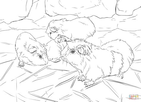 guinea pig coloring pages guinea pigs coloring page free printable coloring pages
