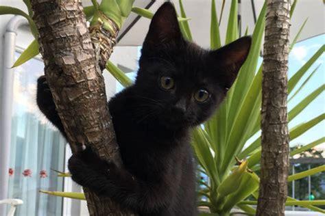 wann kastrieren katze katzen immer kastrieren radio tirol