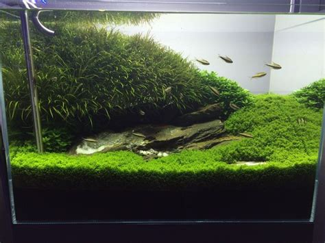 shrimp tank aquascape shrimp tank on pinterest aquascaping planted aquarium