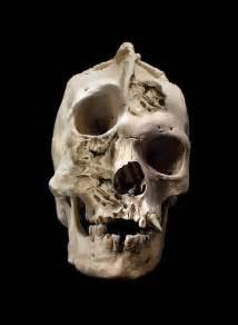 Skull on pinterest real human skull human skull and raccoon skull