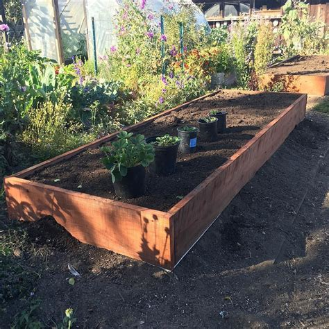 how deep should a raised garden bed be raised beds in garden 4 215 12 12 deep the shelter blog