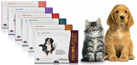 revolution for puppies and kittens revolution for cats and dogs best debugging solution vetsupply au