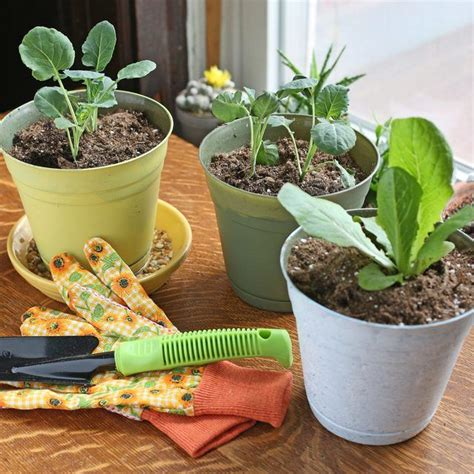 Indoor Vegetable Garden Ideas 1000 Ideas About Indoor Vegetable Gardening On Vegetable Gardening Indoor