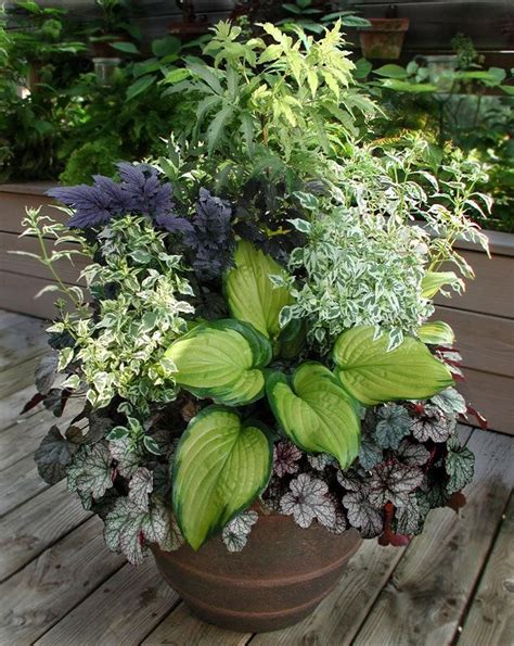 container gardening plants shade container gardening ideas great combo for shade