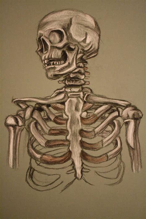skeleton art www imgkid com the image kid has it