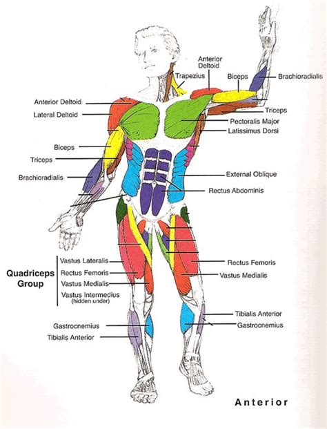 anatomy and physiology diagram quizzes charts and on