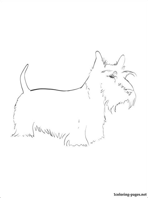scottish terrier coloring page coloring pages