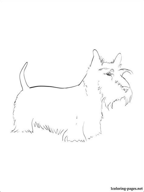 scottie dog coloring page scottish terrier coloring page coloring pages