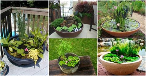 how to make a koi pond in your backyard water garden containers archives my amazing things
