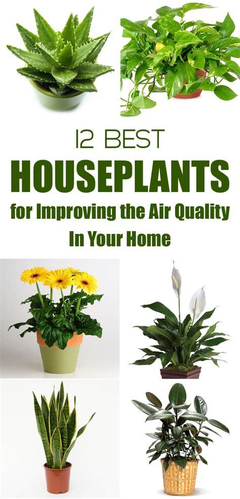 houseplants  improving  air quality   home