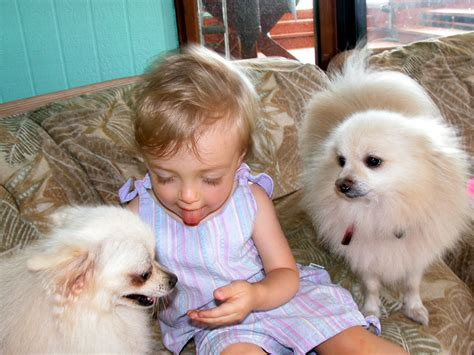 pictures of baby dogs baby dogs image search results