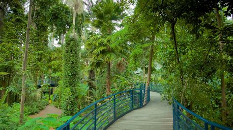 Adelaide Botanic Gardens In Adelaide South Australia Botanic Gardens South Australia