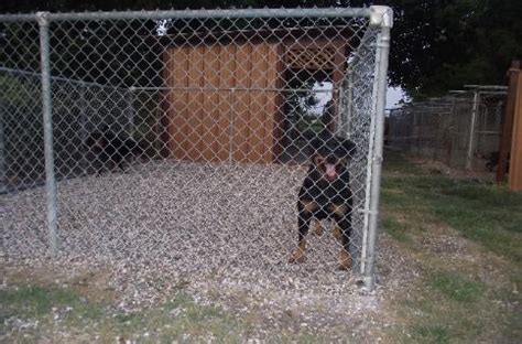rottweiler studs near me german rottweiler breeders houston tx photo