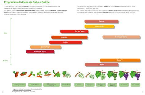 uva da tavola italia basf crop protection italia oidio e botrite basf crop