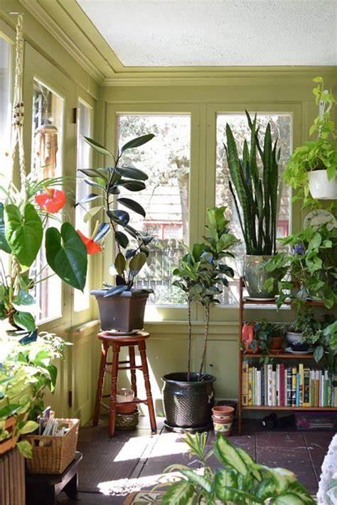 apartment plants ideas decorating with house plants i love green inspiration