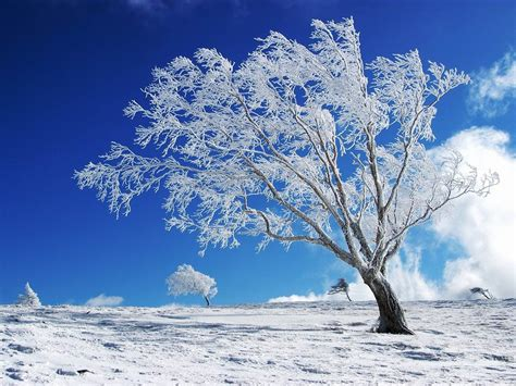 winter tree wallpapers winter desktop wallpapers and backgrounds