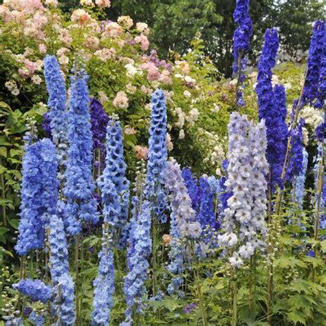 Crocus Plante Vivace Ou Annuelle by Fleurs De Prairie Liste Ooreka