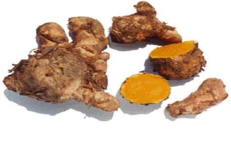Obat Maag Tradisional Jahe tanaman obat yang penting berisi