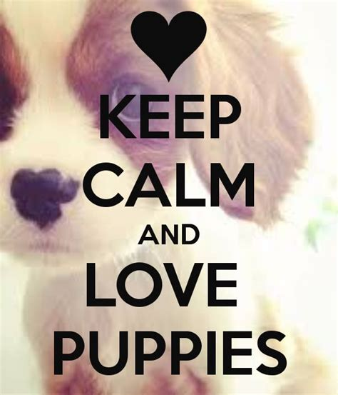 imagenes de keep calm and love horses keep calm and love puppies we love animals pinterest