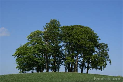 images of trees copse of trees pictures free use image 15 98 3 by freefoto
