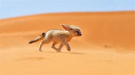 animales vertebrados donde viven como nacen como nacen los animales del desierto donde viven como