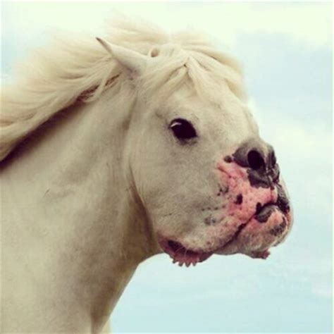 dogs that look like horses 15 dogs that don t look like dogs