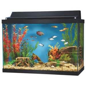 Aquarium For Home Aquariums Devtome
