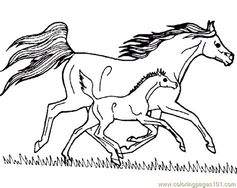 free online coloring pages of horses horse coloring pages horse coloring pages online free