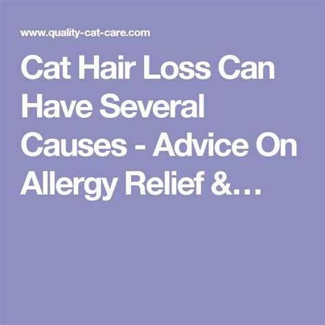 cat hair loss ideas  pinterest hair loss